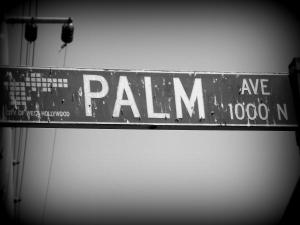 palmave1